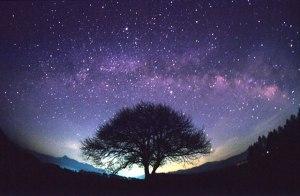 Starlit_Sky