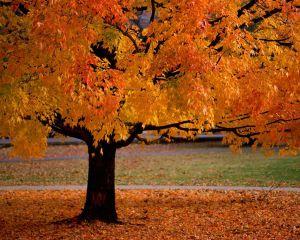 nature_fallcolors_002_1280x1024